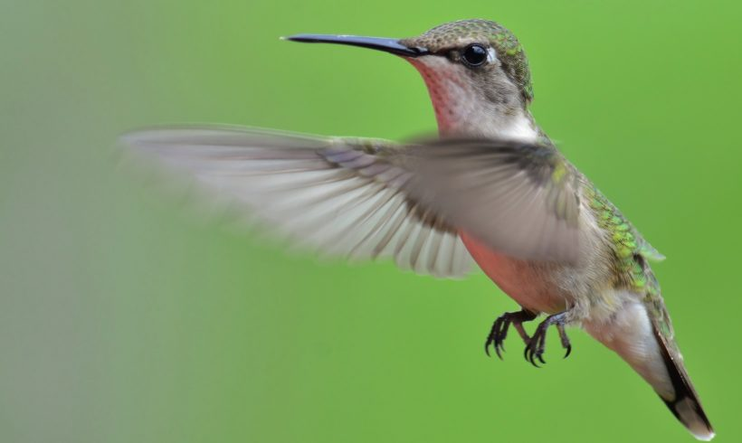 Feed the hummingbirds before their big trip south