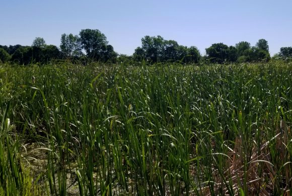 Red-tail Land Conservancy to protect Henry County wetland