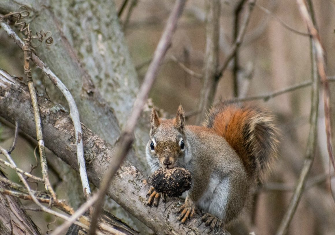 Nuts for wildlife!